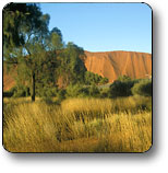 Uluru - Kata Tjuta National Park - Lismore Accommodation