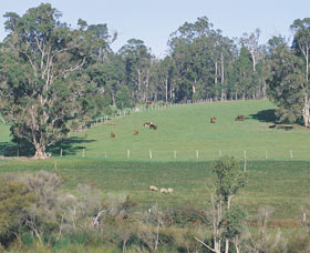 Scenic Drives - Bunbury Collie Donnybrook - Lismore Accommodation