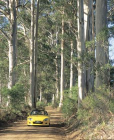 Mount Shadforth Scenic Drive - Lismore Accommodation