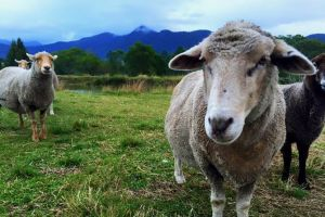 Trevena Glen Farm Animal Experience - Lismore Accommodation